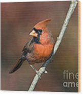 Male Northern Cardinal - D007813 Wood Print