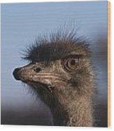 Male Ostrich Namibia Wood Print by David Kleinsasser