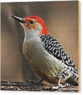 Male Red-bellied Woodpecker 4 Wood Print