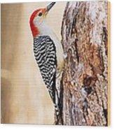 Male Red-bellied Woodpecker Wood Print