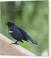 Male Red-winged Blackbird Wood Print