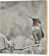 Male Ruby Throated Hummingbird Wood Print