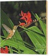 Male Rufous Hummingbird Wood Print