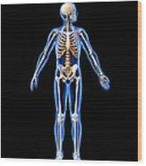 Male Skeleton, Artwork Wood Print