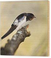 Male Swallow Wood Print