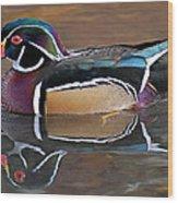 Male Wood Duck Wood Print