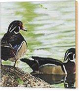 Male Wood Ducks Wood Print