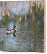 Mallard - Duck - Lonely Guy Wood Print