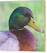 Mallard Drake In Shade Wood Print