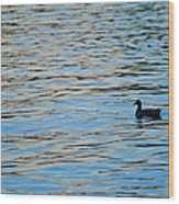 Mallard Duck And Blue Water Wood Print by Marianne Campolongo