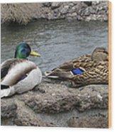 Mallard Duck Couple Wood Print