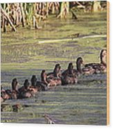 Mallard Ducks In A Row Wood Print