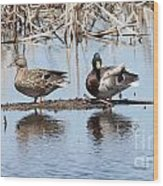Mallard Ducks Sitting On A Sandbar  Wood Print