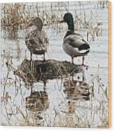 Mallard Ducks Standing On A Rock Wood Print