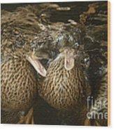 Mallard Ducks Underwater Wood Print