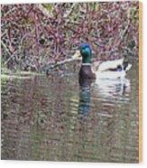Mallard On A Pond Wood Print