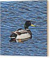 Mallard Swimming Wood Print