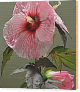 Mallow Hibiscus Wood Print