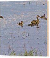 Mama Duck And The Kiddies Wood Print