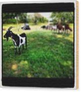 Mama Goat Wood Print