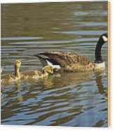Mama Honker And Goslings Wood Print