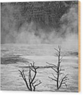 Mammoth Hot Spring Wood Print