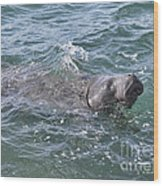 Manatee At Ponce Inlet Wood Print