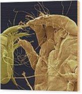 Mange Mites, Sem Wood Print
