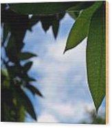 Mango Tree Leaf Wood Print