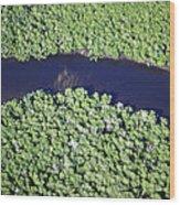 Mangrove River Wood Print