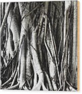 Mangrove Tentacles  Wood Print