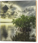 Mangroves I Wood Print