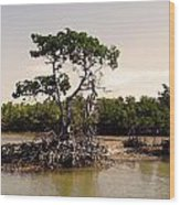 Mangroves In The Everglades Wood Print
