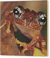 Mantellid Frog Boophis Tephraeomystax Wood Print