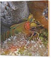 Mantis Shrimp Wood Print
