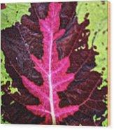 Many Leaves Of Coleus Wood Print