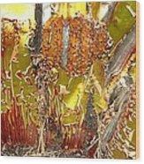 Manzanita Knees Wood Print