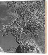 Manzanita Outcrop Wood Print