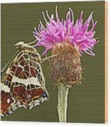 Map Butterfly Araschnia Levana Wood Print