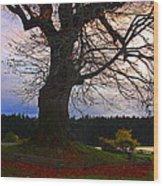 Maple Evening Wood Print