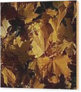 Maple In Fall Wood Print