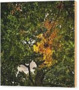 Maple In Oak Grove Wood Print