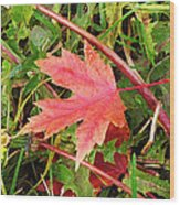 Maple Leaf Forever Wood Print
