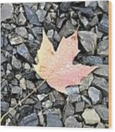 Maple Leaf In The Rain Wood Print