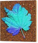 Maple Leaf On Pavement Wood Print
