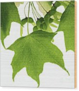 Maple Leaves And Seeds Wood Print