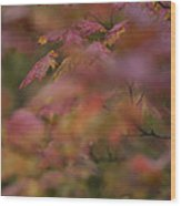 Maple Leaves Are Bright Red On A Rainy Wood Print