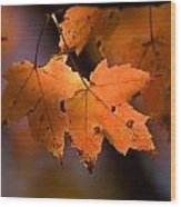 Maple Leaves In The Fall In Middlebury Wood Print