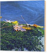 Maple Leaves On Mossy Rock Wood Print