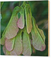 Maple Seed Wood Print